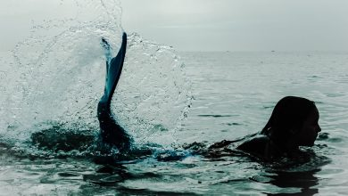 Photo of Schwimmen ins Licht – Die Sage der Sirenen