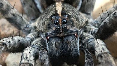 Bild von Acht im Jahr – Spinnen und der Schlaf