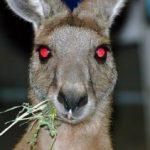 Bild von DerKänguruGuru